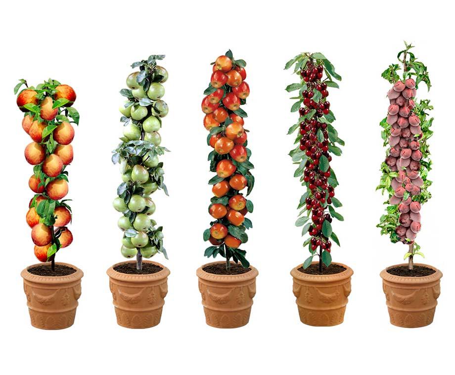Set Van 5 Of 10 Fruitbomen - Appel, Peer, Kers, Pruim En Perzik!