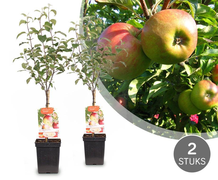 Boom In Pot Op Balkon.Twee Appelbomen Voor Tuin Of Balkon Geeft Snel Veel Fruit