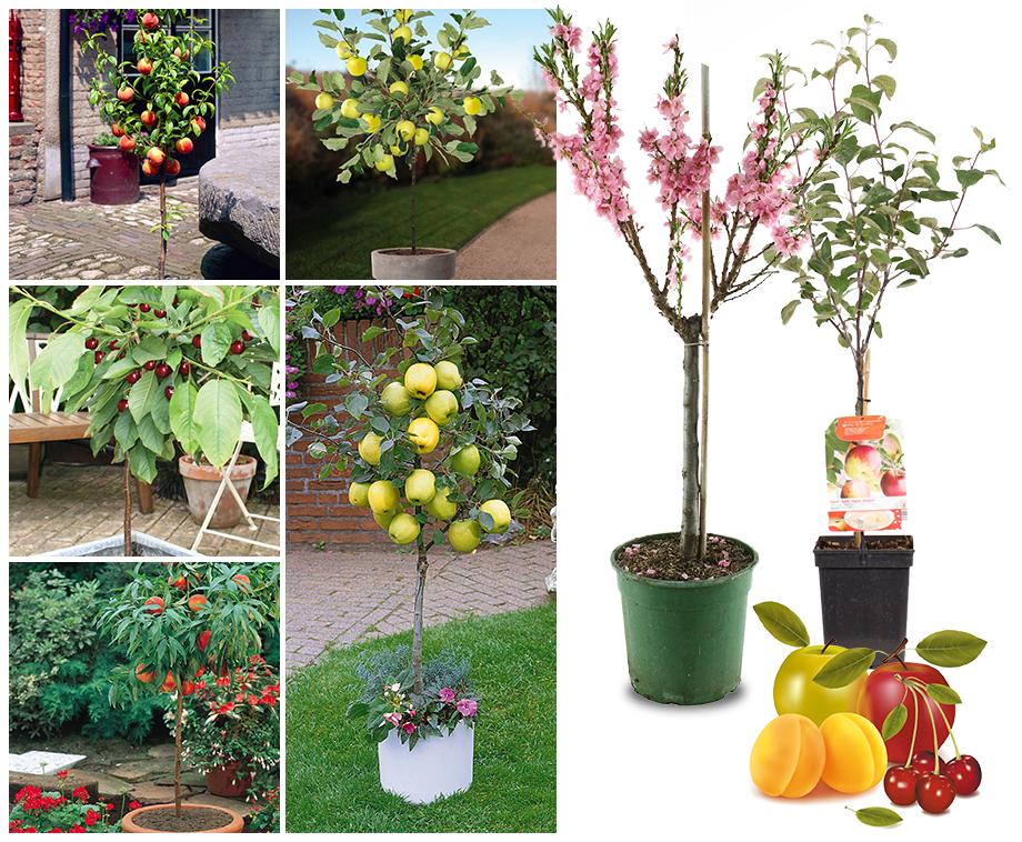 Favoriete Fruitbomen Voor Je Tuin, Terras Of Balkon - Keuze Uit 8 Unieke  &OX51