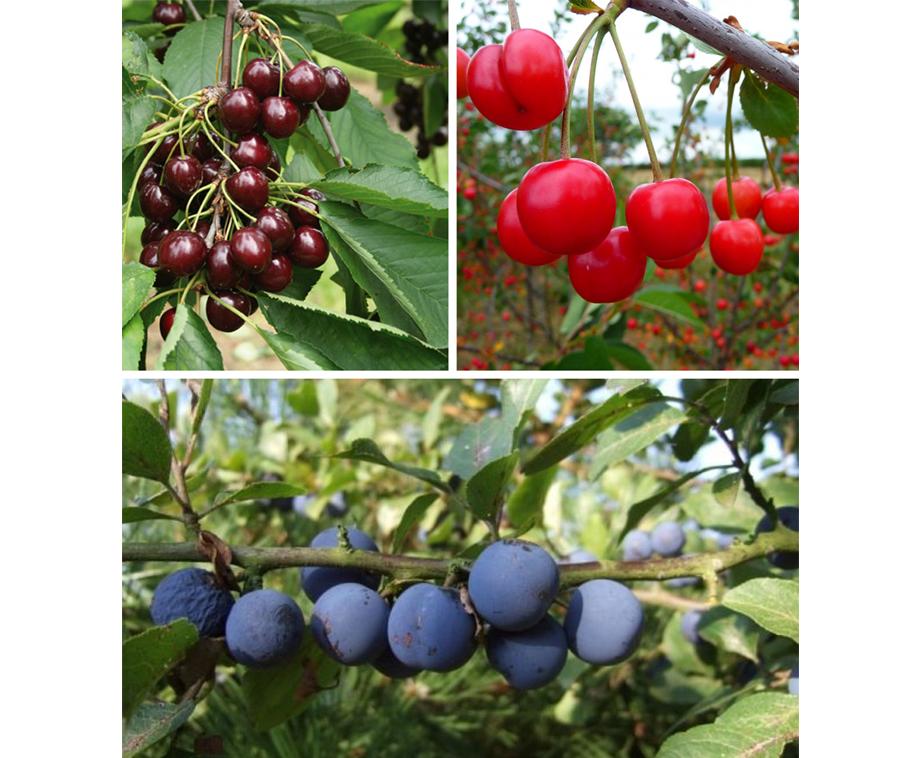 Top Fruitbomen Voor Je Tuin, Terras Of Balkon - Keuze Uit 8 Unieke  @RO76