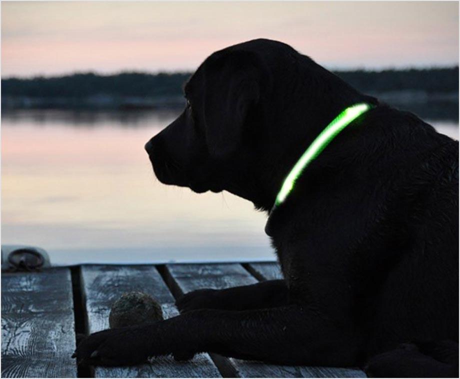 Honden Halsband Met LED Verlichting - Altijd Veilig Met Uw Hond Op ...