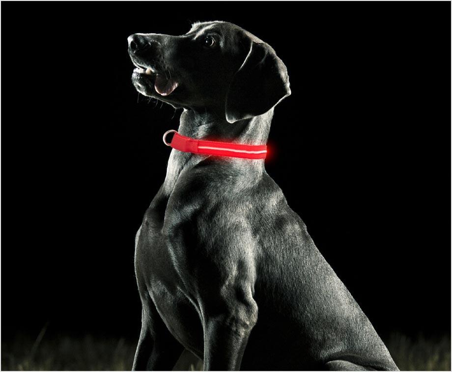 honden halsband met led verlichting altijd veilig met uw hond op stap