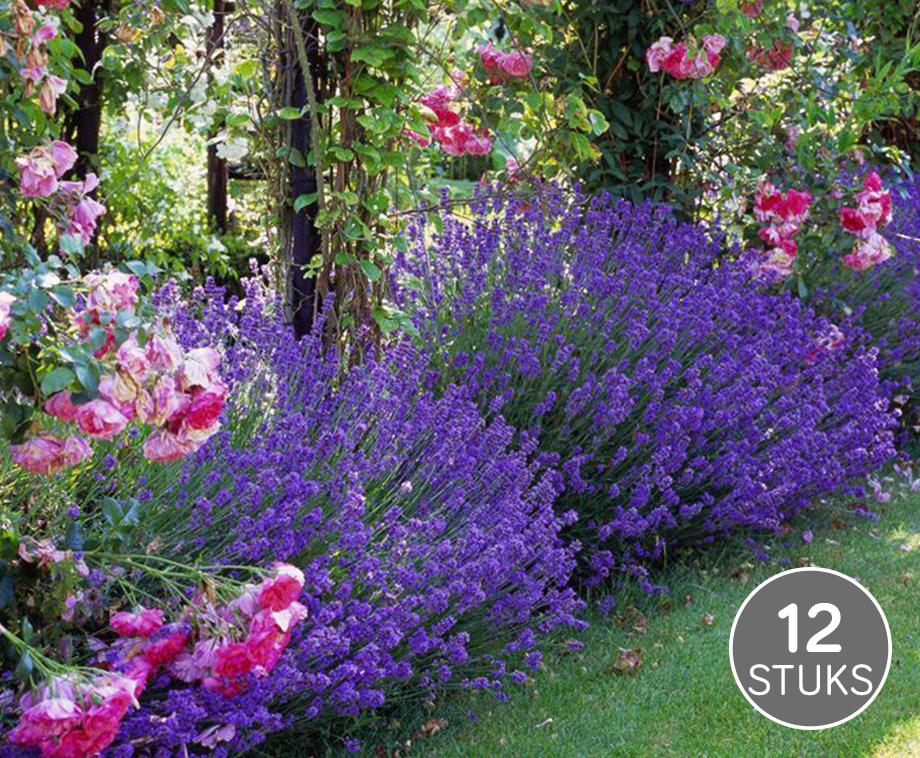 Rond wandrek met industriele uitstraling aanbieding for Wandrek tuin