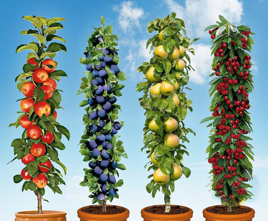 Set van 4 of 8 Pilaar Fruitbomen - Nu Planten = Volgend Jaar Fruit!